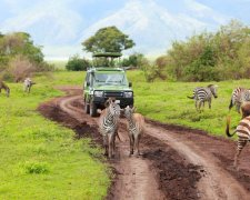 4 Days SHARED safari - Serengeti, Ngorongoro Crater and Tarangire