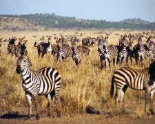 4 Days Private Safari - Serengeti, Ngorongoro Crater and Tarangire