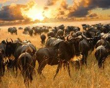 5 Days Private Safari - Lake Manyara, Serengeti, Ngorongoro Crater, Tarangire