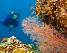 Scuba Diving - Zanzibar's best dive sites